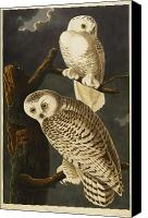 Snowy Night Canvas Prints - Snowy Owl Canvas Print by John James Audubon