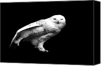 Snowy Canvas Prints - Snowy Owl Canvas Print by Malcolm MacGregor