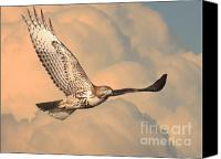 Animals Art Digital Art Canvas Prints - Soaring Hawk Canvas Print by Animals Art
