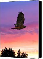 Trees Digital Art Canvas Prints - Soaring Hawk Canvas Print by Nick Gustafson