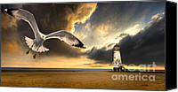 Gull Photo Canvas Prints - Soaring Inshore Canvas Print by Meirion Matthias