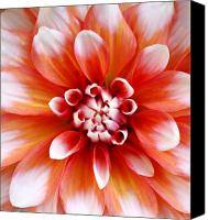 Northwest Art Canvas Prints - Soft Dahlia Canvas Print by Cathie Tyler