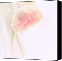 Fine Art Photo Canvas Prints - Soft Canvas Print by Kristin Kreet