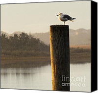 Gull Photo Canvas Prints - Soft Mornings Canvas Print by Karen Wiles