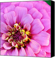 Zinna Canvas Prints - Soft to the Touch Canvas Print by Bruce Bley