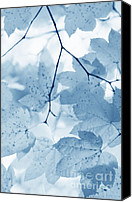 Blue Leaf Canvas Prints - Softness of Blue Leaves Canvas Print by Jennie Marie Schell