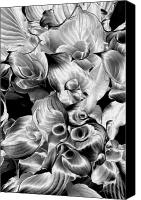 Hostess Canvas Prints - Solarized Hosta Canvas Print by Frederic A Reinecke