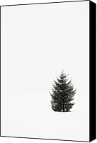 Copy Space Canvas Prints - Solitary Evergreen Tree Canvas Print by Jennifer Squires
