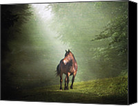 Horse Standing Canvas Prints - Solitary Horse Canvas Print by Christiana Stawski