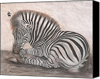 Zebra Pastels Canvas Prints - Solitude Canvas Print by Sarojini Muller
