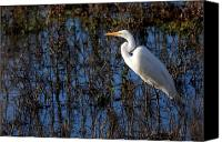Snowy Egrets Canvas Prints - Solitude Canvas Print by Wingsdomain Art and Photography