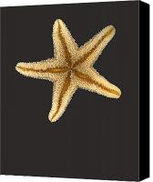 Ocean  Canvas Prints - Solo Starfish II Canvas Print by Suzanne Gaff