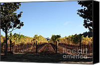 Vine Canvas Prints - Sonoma Vineyards - Sonoma California - 5D19314 Canvas Print by Wingsdomain Art and Photography