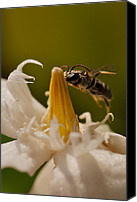 Macro Photography Canvas Prints - Sooo Sweet Canvas Print by Arj Munoz