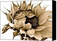 Sunflowers Canvas Prints - Sophisticated Canvas Print by Gwyn Newcombe