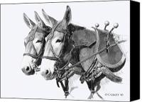 Pencil Drawing Canvas Prints - Sorrel Mule Team Canvas Print by Bethany Caskey