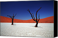 Tree Trunk Canvas Prints - Sossusvlei In Namib Desert, Namibia Canvas Print by Igor Bilic Photography