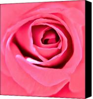 Rose Bud Canvas Prints - Soul Searching Canvas Print by Gwyn Newcombe