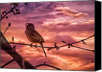 Sunrise Canvas Prints - Sounds of Spring Canvas Print by Bob Orsillo