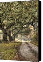 Charleston Sc Harbor Tours Canvas Prints - Southern Drive Live Oaks and Spanish Moss Canvas Print by Dustin K Ryan