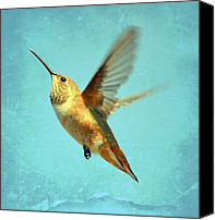Annas Hummingbird Canvas Prints - Space Canvas Print by Fraida Gutovich