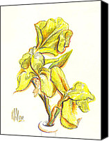 Bright Drawings Canvas Prints - Spanish Irises Canvas Print by Kip DeVore