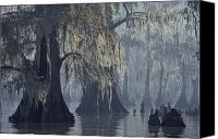 Wetlands Canvas Prints - Spanish Moss Drapes Old Cypress Trees Canvas Print by John Eastcott And Yva Momatiuk