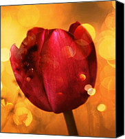Flower Photography Canvas Prints - Sparkle of the Tulip Canvas Print by Cathie Tyler