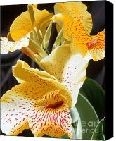 Canna Lilies Canvas Prints - Speckled Lucifer Canna Lily 2 Canvas Print by Sharon Von Ibsch