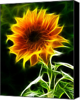 Sunflowers Canvas Prints - Spectacular Sunflower Canvas Print by Pamela Johnson
