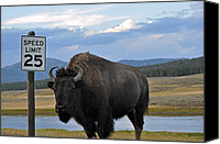 Yellowstone Park Canvas Prints - Speedy Bison in Yellowstone National Park Canvas Print by Bruce Gourley