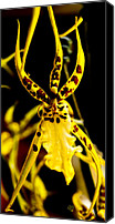 Barbara Middleton Canvas Prints - Spider Orchid Canvas Print by Barbara Middleton