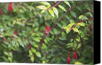 Flowers   Spider Canvas Prints - Spider Web Canvas Print by Craig Tuttle