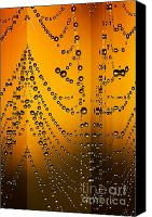 Czintos Canvas Prints - Spider web reflections Canvas Print by Odon Czintos