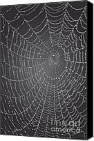 Grayscale Canvas Prints - Spider web With Dew Drops Canvas Print by Dave Gordon