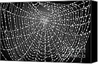 Trap Canvas Prints - Spider Web With Dew Drops No. 2 Canvas Print by Dave Gordon