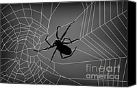 Nature Canvas Prints - Spider Web With Spider Canvas Print by Dave Gordon