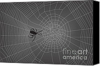 Silver Canvas Prints - Spider Web With Spider No. 2 Canvas Print by Dave Gordon