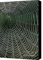 Color Stretching Canvas Prints - Spiders web drops of dew at dawn Canvas Print by Sami Sarkis