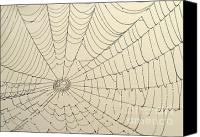 Creepy Canvas Prints - Spiderweb at Dawn Canvas Print by Sabrina L Ryan