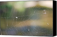 Michele Carter Canvas Prints - Spiderweb Canvas Print by Michele Carter
