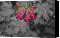 Selective Color Canvas Prints - Splash of Color Canvas Print by Noah Cole