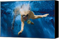 Diving Dog Canvas Prints - Splashdown 2 Canvas Print by Jill Reger