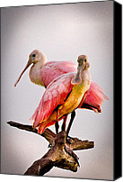Cay Canvas Prints - Spoonbills II Canvas Print by Debra and Dave Vanderlaan