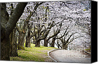 Walkway Canvas Prints - Spring apple orchard Canvas Print by Elena Elisseeva