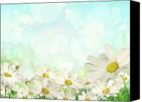 Illustration Canvas Prints - Spring Background with daisies Canvas Print by Sandra Cunningham