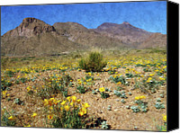 Desert Canvas Prints - Spring Bloom Franklin Mountains Canvas Print by Kurt Van Wagner