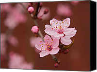 Bob Smithing Canvas Prints - Spring Blossoms Canvas Print by Bob Smithing