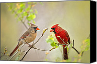 Northern Photo Canvas Prints - Spring Cardinals Canvas Print by Bonnie Barry