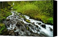 Rainforest Canvas Prints - Spring Cascades Canvas Print by Mike  Dawson